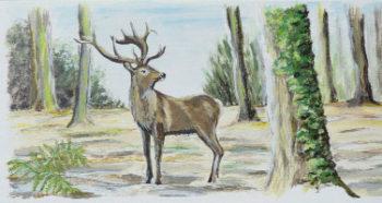 peinture cerf forêt